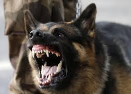 cão fereoz